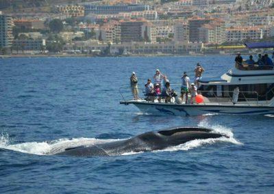 barco-con-ballenas